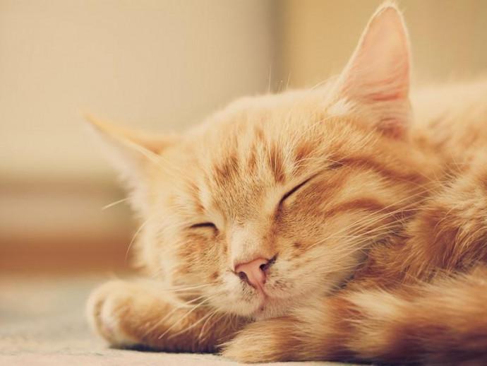実はとっても表情豊か!「表情」から分かる猫の気持ち3つ