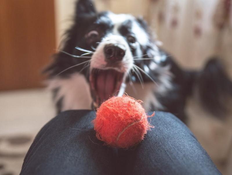 初心者にもおすすめ!愛犬と自宅でできる「ホームアジリティ」にチャレンジ