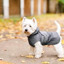 犬も飼い主さんも気分が上がる♡ストレスフリーな犬の洋服の選び方