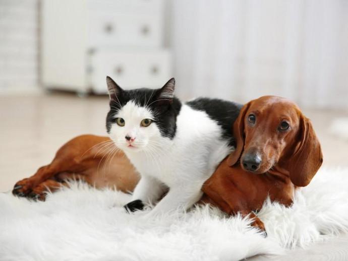 世界に1つだけ!オーダーメイドで作る愛犬&愛猫プリントグッズ6選