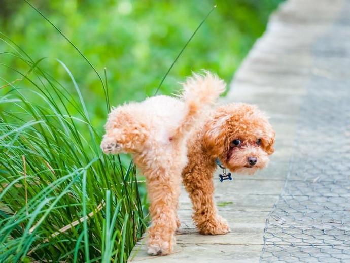 まさに犬が西向きゃ尾は東!? 犬がトイレをする方角は決まっているという研究結果に注目