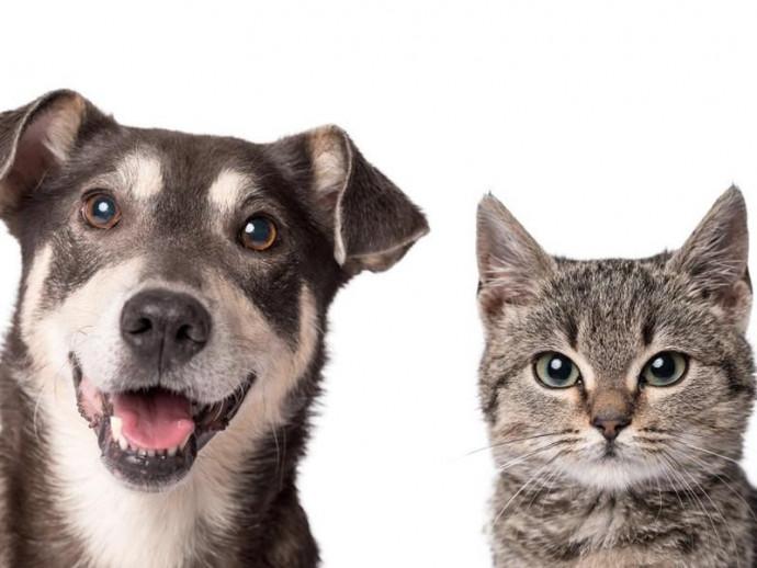 充血だけじゃない!犬の「目が赤い」ときに考えられる病気を症例写真と共に解説