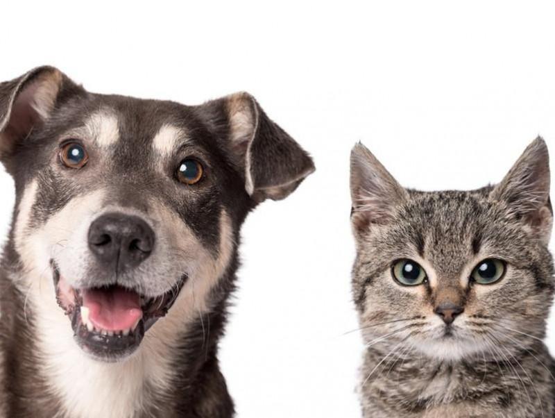 【獣医師執筆】充血だけじゃない!犬の「目が赤い」ときに考えられる病気を症例写真と共に解説