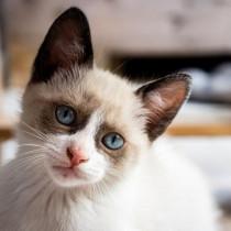 免疫力が下がっているときは要注意!猫の病気「クリプトコッカス症」って何?