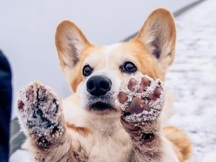犬の爪切りのタイミングは?肉球がひび割れたら?犬の爪・肉球の正しいお手入れ方法