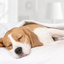 犬の睡眠時間は◯◯時間!犬の睡眠メカニズムと寝ているときの注意点