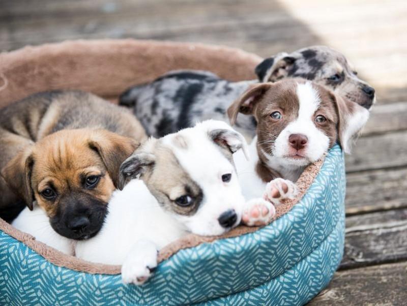 犬の得意は脳で決まる!犬種による脳構造の違いと得意分野の関連について
