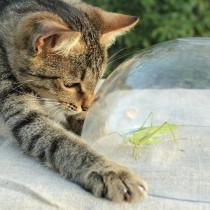 【獣医師執筆】愛猫が虫をムシャムシャ…止めるべき?猫が虫を食べる理由と注意したい危険な虫