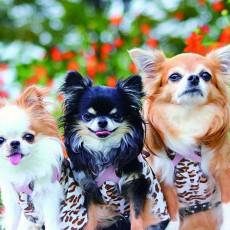 今日は犬の日!わんちゃんの知識を身につけよう ~今月のわんにゃ発表!Vol3~