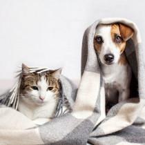 寒さは目にダメージを与える?これからの時期に知っておきたい犬猫のための冬知識