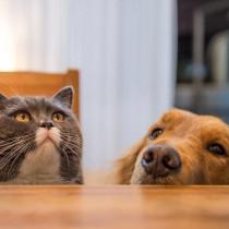 【獣医師執筆】気付かないと失明する恐れも…!?犬猫の「目が白い」ときに考えられる原因
