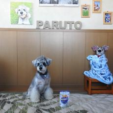 愛犬の健康に対するサインに気付けるのは飼い主さまだけ<PR>