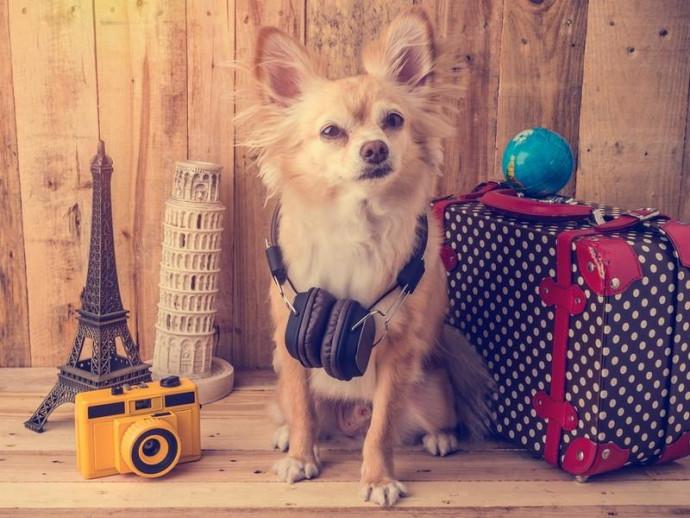 冬の旅行「同行」と「留守番」では何が必要?旅行前に準備しておきたい犬の持ち物リスト