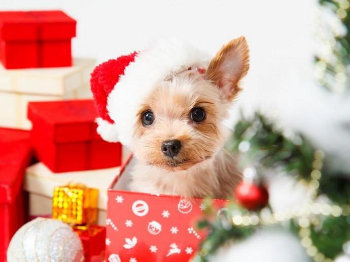 今年はどうする?わんちゃんとの「クリスマス」の過ごし方アイディア5つ
