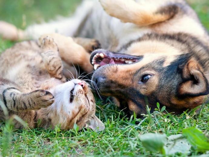 【獣医師執筆】シェルターに特化した獣医療を導入!カナダの動物保護施設「Lanark Animal Welfare Society」で動物保護事情を学ぶ