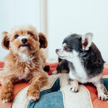 「ミックス犬」は雑種と違うの?飼う前に知っておきたい「ミックス犬」の特徴と気をつけるべき病気