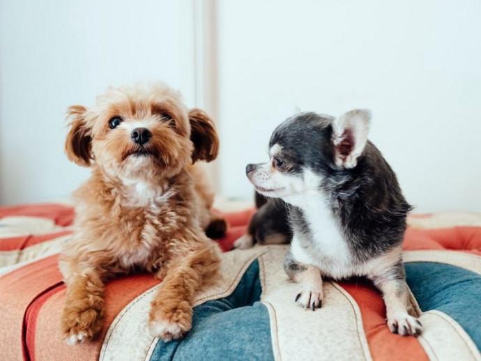「MIX犬」は雑種と違うの?飼う前に知っておきたい「MIX犬」の特徴と気をつけるべき病気