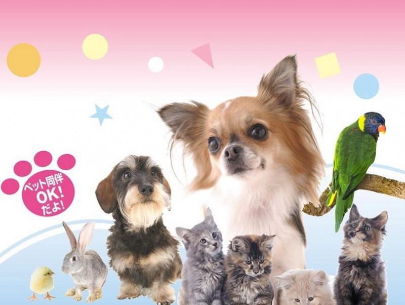 年明け最初のイベントはこれに決まり!参加・体験型のペットイベント「Pet博2020 横浜」