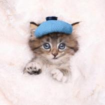 猫が咳をしていたら要注意!? 非常に危険な「猫風邪」の特徴と対策
