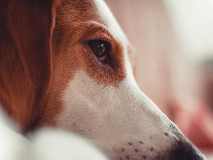 愛犬に「ものもらい」?他の症状の可能性は?  犬猫の目に「できもの」が出来た場合に考えられる症状