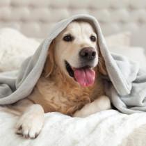 冬の乾燥…犬にベストな湿度は何%?犬に配慮した加湿器の使い方
