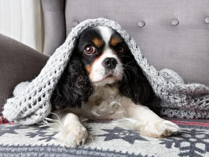 鼻をズルズル…これって風邪なの?犬の「鼻水」考えられる原因と対処法