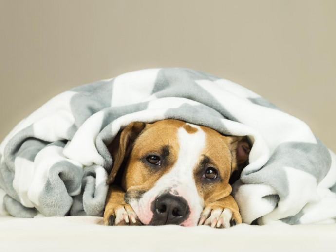 犬が吐いた!すぐに受診したい緊急性のある症状と家庭でできる対処法