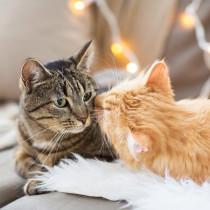 猫はとってもおしゃべり♪ 「鳴き方」から猫の気持ちを知ってもっと仲良くなろう!