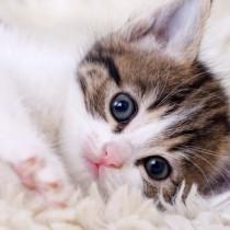 【獣医師執筆】自由な猫と楽しく過ごすには?実は大切な「しつけの基本」を徹底解説