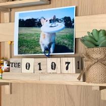 ずっと使える♡ペット写真を飾れる「万年カレンダー」を100均でDIY!
