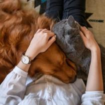 愛犬や愛猫の未来のリスクに備える!ペットの「遺伝子検査」を実際にやってみた