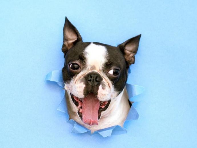 どうして入りたがるの?犬が穴に頭を突っ込む理由を行動学的に解説!