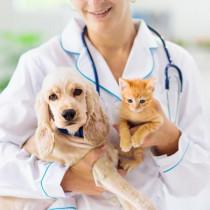 【獣医師執筆】病院と飼い主さんの協力が大事!ペットの診察の際に飼い主さんが覚えておきたいこと3つ