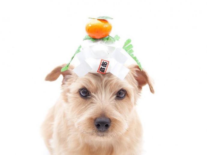 愛犬と美味しく新年を迎えよう!犬用「おせち」手作りレシピ