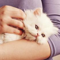頭をスリスリ…信頼するとこんな姿に♡大好きな人にだけ見せる猫の仕草5つ