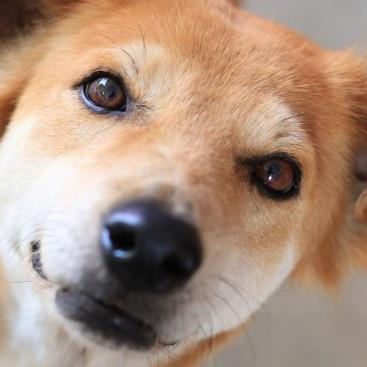赤外線にも注意して!愛犬の目が見えなくなる前に飼い主さんがしておくべきこと