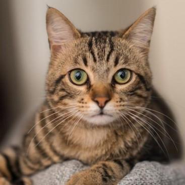 猫の視力って低下するの?目の特徴と、視力に影響を与える病気を解説
