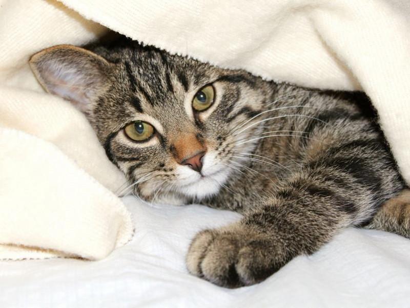 猫が毛布を「もみもみ」「ふみふみ」…飼い主さんや毛布を踏んでいるのはどんな理由?