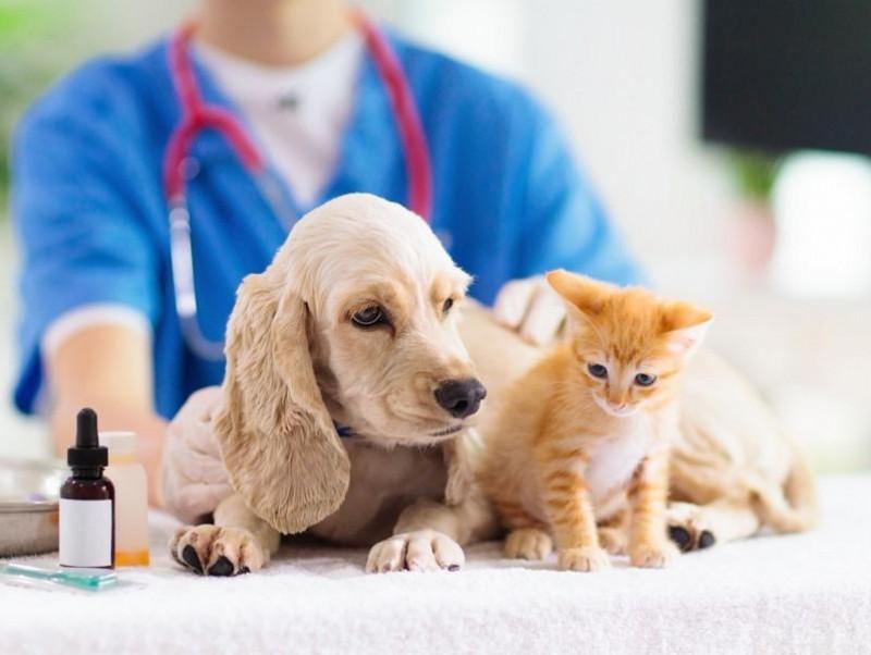 心と体の健康を保つ選択肢に?獣医行動診療科認定医が紹介する犬・猫用「サプリ」の種類と注意点