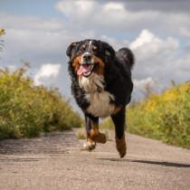 【獣医師執筆】犬の健康のために知っておきたい!正しい運動量のポイント3つ
