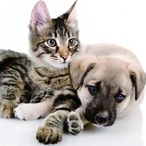 ペットとの暮らし。わんちゃん、ねこちゃんを迎えるなら・・・