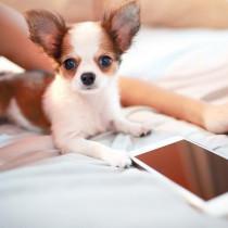 ストレスフリーに貢献!愛犬のお世話に使いたい「IoTグッズ」3選