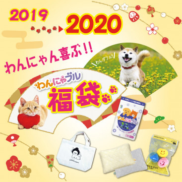 2020年はこれで決まり♪うちの子と新年を迎える前に