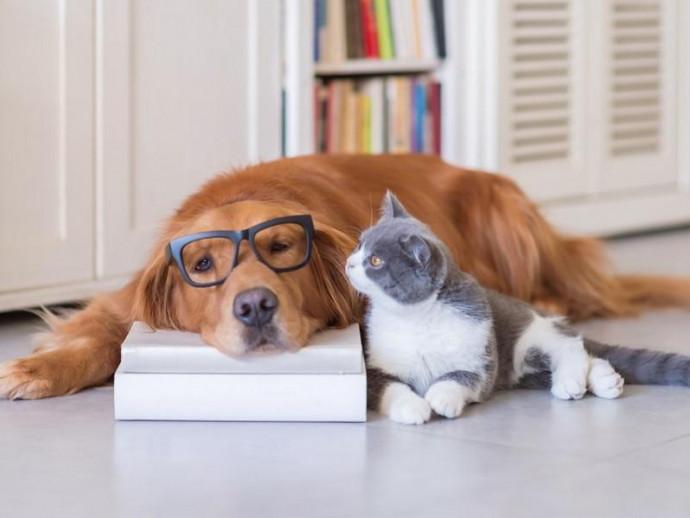 大切な家族のスペシャリストになろう!愛犬家・愛猫家におすすめな動物関連の資格5選