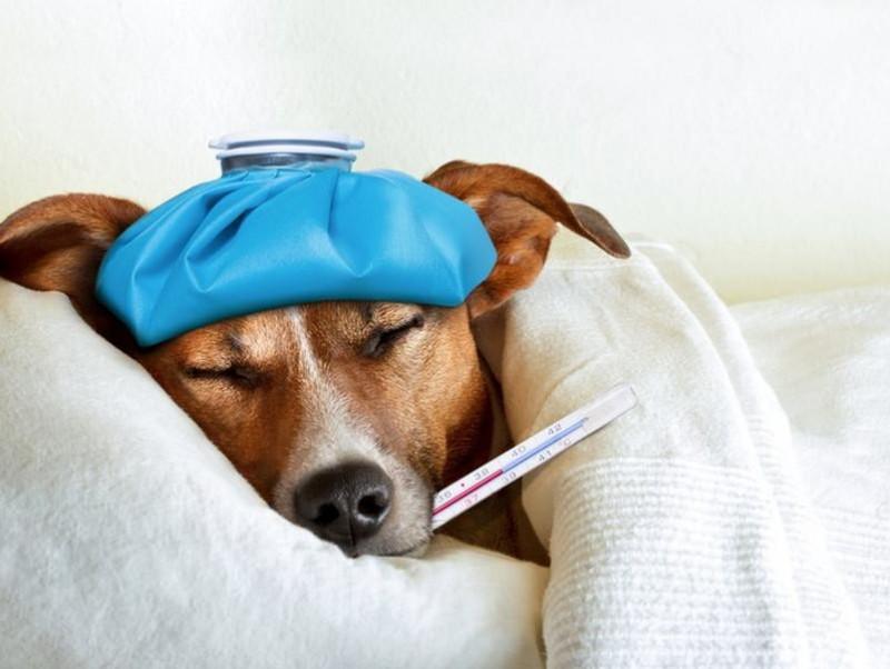子犬は特に注意!犬も風邪を引く…「ケンネルコフ(犬伝染性気管気管支炎)」は人にもうつるの?
