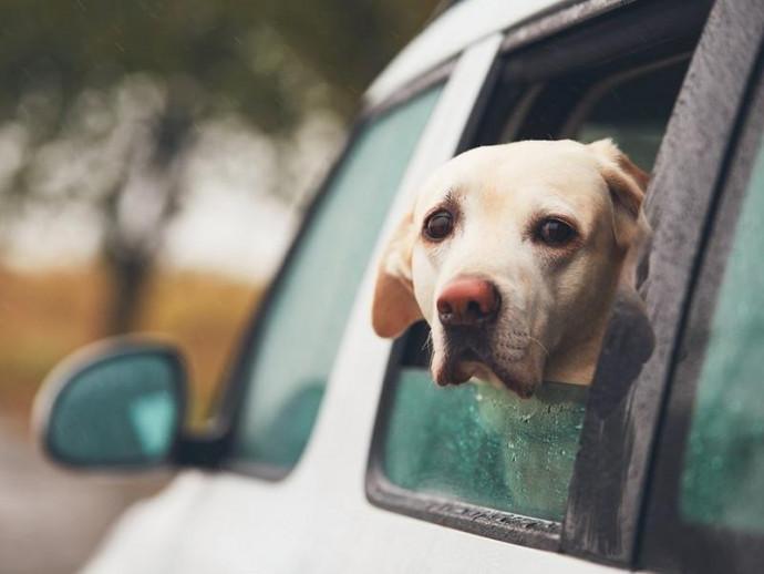 吐く、吠える、震える…犬の車嫌いは治る?犬が車を苦手な理由とその克服方法
