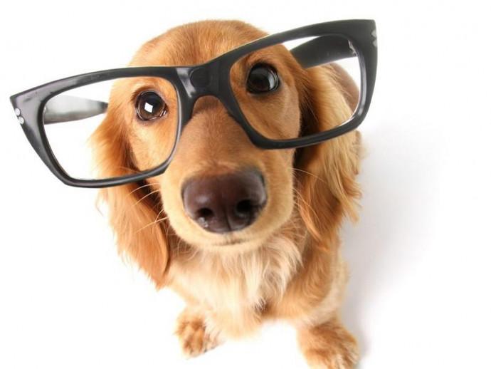 ブルーライトは大丈夫?テレビや蛍光灯は?人工的な光が犬の目に与える影響