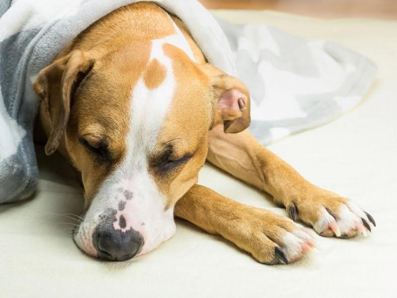 冬に見られる犬の「下痢」…寒いせいじゃなかった!考えられる原因と病院へ行くべき指標