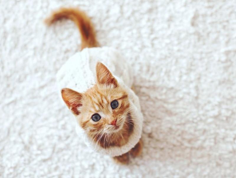 冬場に注意したい静電気!静電気による猫の健康への影響と対策