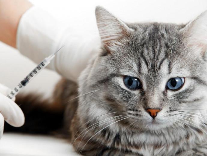【獣医師執筆】接種時期はどうしたら?猫のワクチンに関する正しい知識